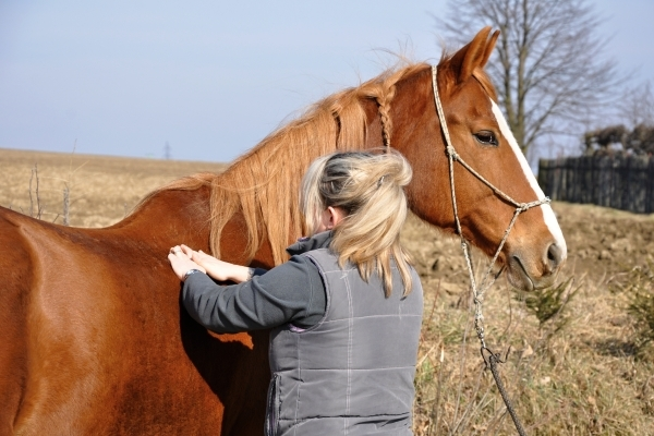 The Equine Touch